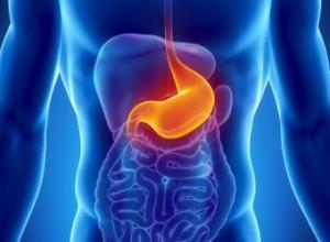 Male stomach - human digestive system